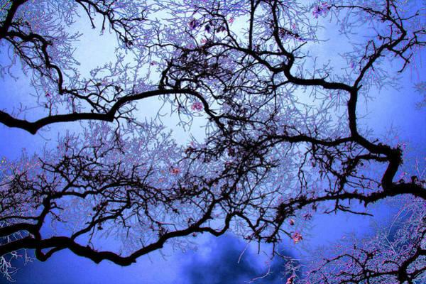 Photograph - Tree Fantasy In Blue by Lee Santa