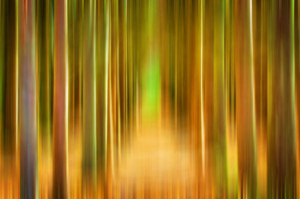 Photograph - Tree Farm Digital Abstracts Motion Blur by Rich Franco