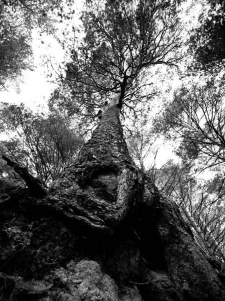 Vegetal Photograph - Tree by Felix M Cobos
