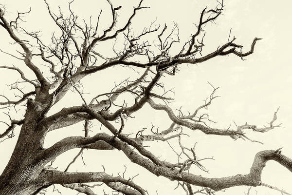 Photograph - Tree Fingers Of Perpetual Motion by John Williams