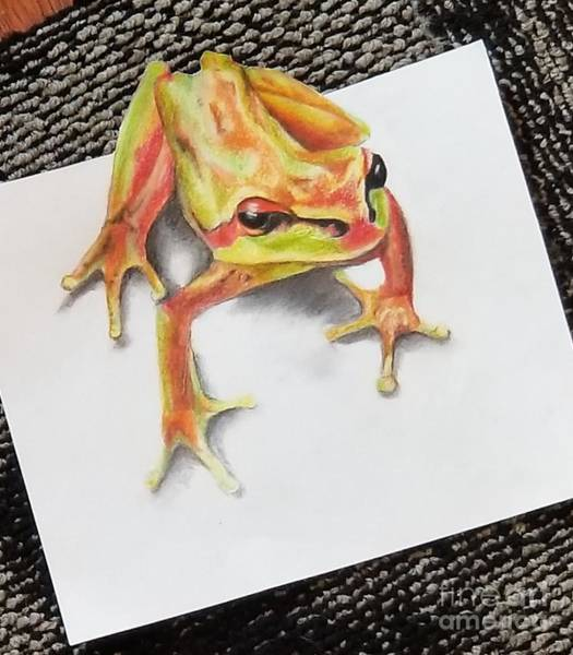 Wall Art - Drawing - Tree Frog 3d  by Sandra Valentini