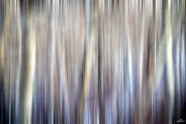 Photograph - Tree Ghosts by Philip Rispin