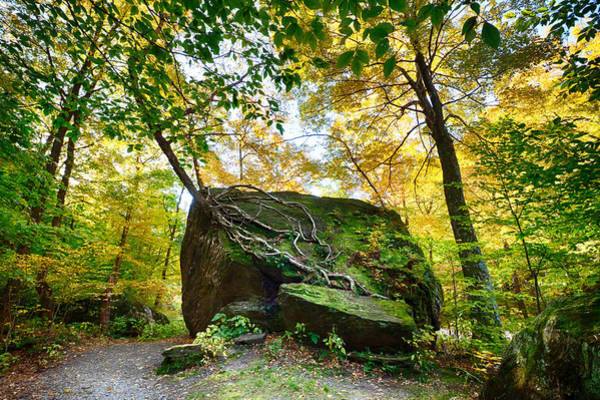 Photograph - Tree Growing From Living Rock On Smuggler's Notch by Jeff Folger