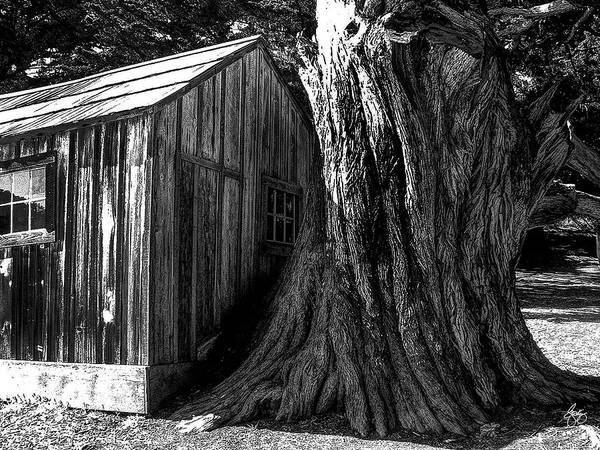 Photograph - Tree House Monochrome by Wayne King