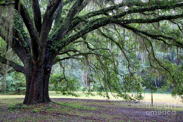 Photograph - Tree Hug by Carol Groenen