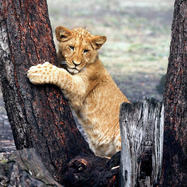 Photograph - Tree Hugger by Nicholas Blackwell