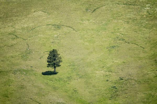 Montana Photograph - Tree by Hyuntae Kim