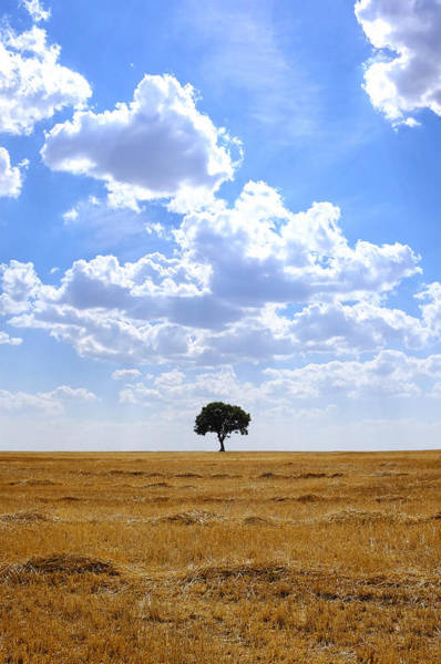 Photograph - Tree In An Harvested Wheat Field  by Fabrizio Troiani