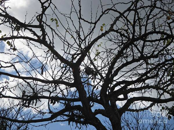 Photograph - Tree In Benalmadena by Chani Demuijlder