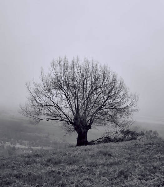 Photograph - Tree In Black And White by Pamela Walton