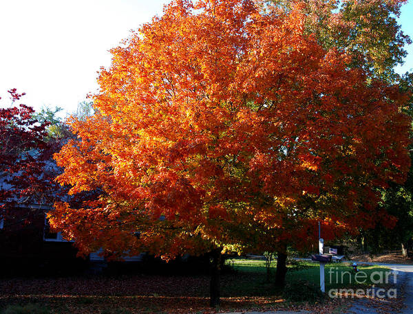 Photograph - Tree In Fall by Susanne Van Hulst