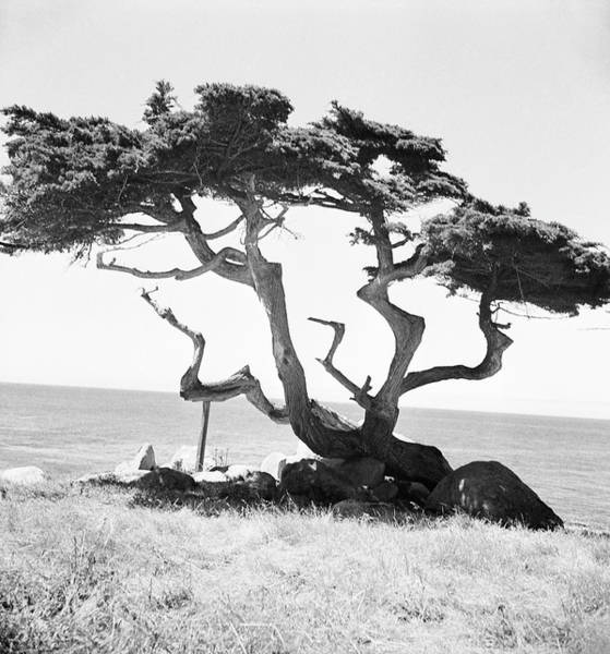 Bare Tree Photograph - Tree In Field by Horst P Horst
