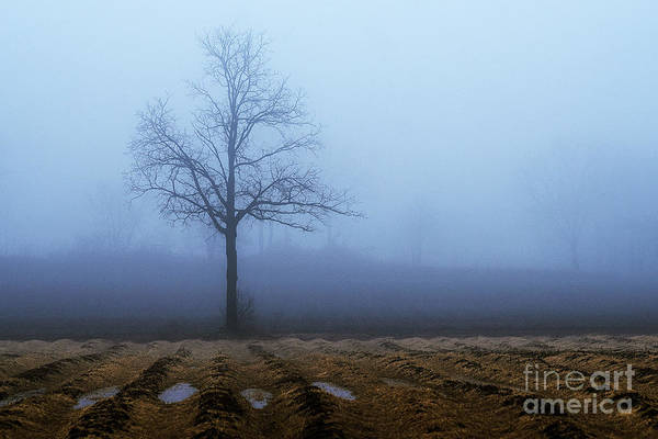 Photograph - Tree In Fog 9954 by Steve Somerville