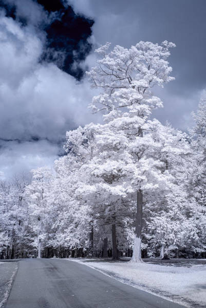 Photograph - Tree In Infrared by Guy Whiteley