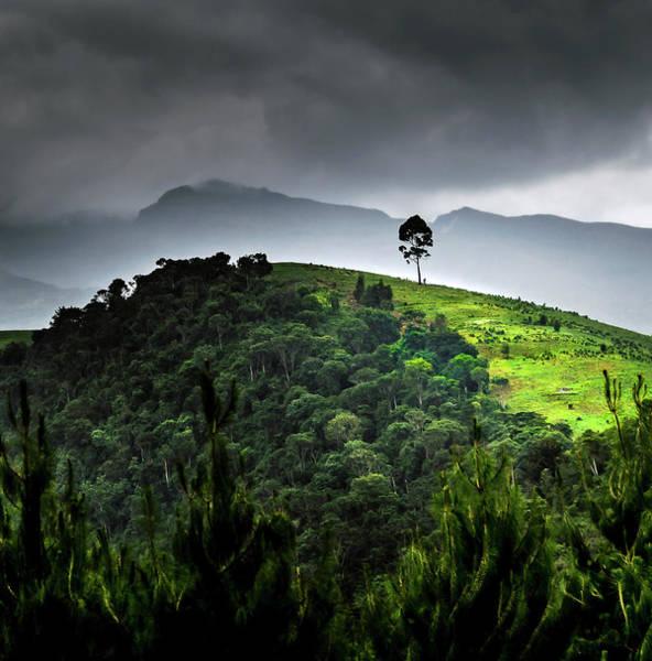 Tree In Kilimanjaro Art Print