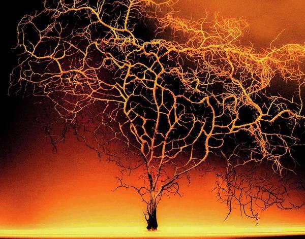 Tree In Light Art Print