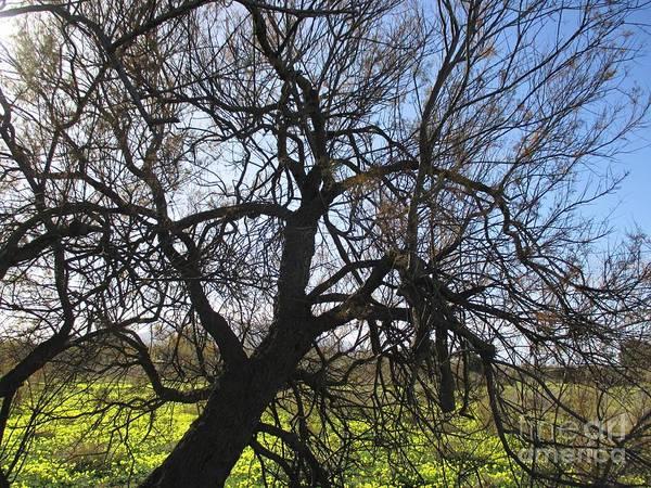 Photograph - Tree In Malaga by Chani Demuijlder