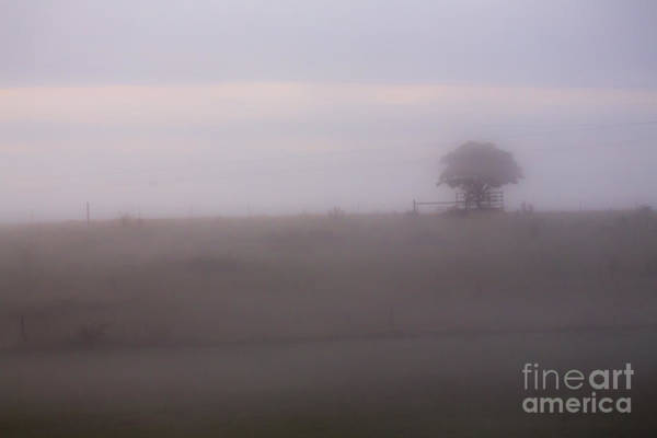 Wall Art - Photograph - Tree In Mist In Paddock by Sheila Smart Fine Art Photography
