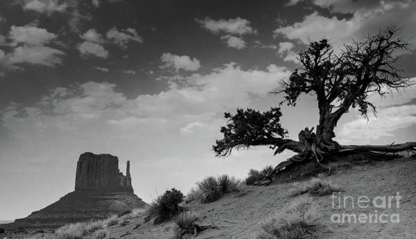 Navajo Indian Reservation Photograph - Monument Tree by DiFigiano Photography