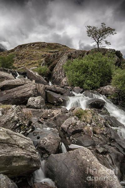 Photograph - Tree In Snowdonia by David Lichtneker