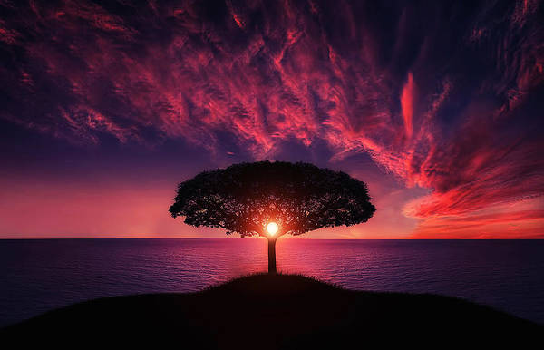 Wall Art - Photograph - Tree In Sunset by Bess Hamiti