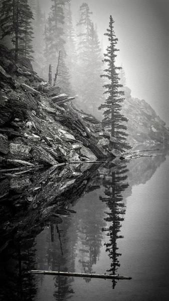 Photograph - Tree In The Fog Bw by Joan Carroll