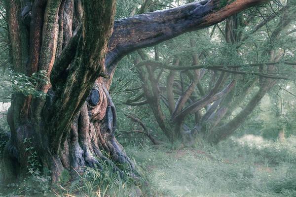 Wall Art - Photograph - Tree In The Fog by Joana Kruse