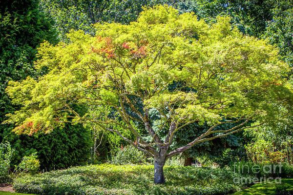 Photograph - Tree In The Garden by David Millenheft