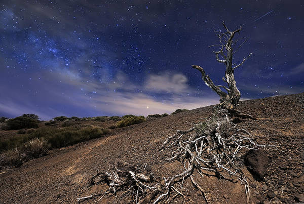 Andreas Photograph - Tree In The Night by Andrea Auf Dem Brinke