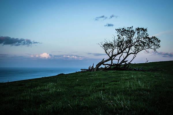 Photograph - Tree In Twilight 1 by Raelene Goddard