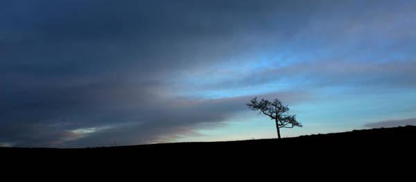 Photograph - Tree In Twilight 3 by Raelene Goddard