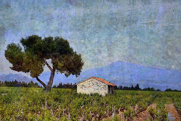 Chateauneuf Photograph - Tree In Vineyard by Joselyn Holcombe