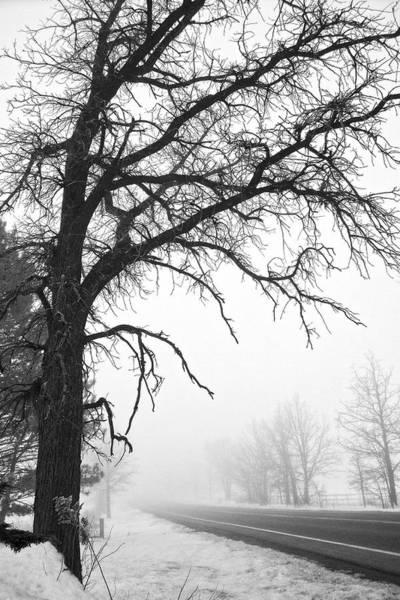 Photograph - Tree In Winter Fog by Lars Lentz