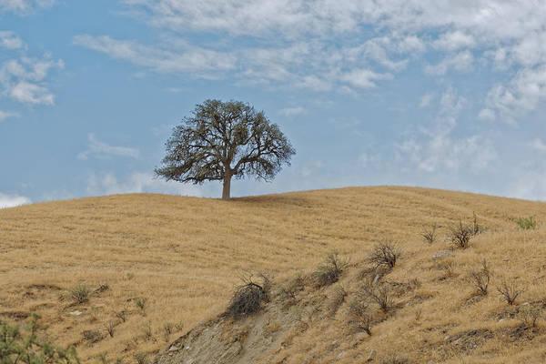 Photograph - Tree by Jim Thompson
