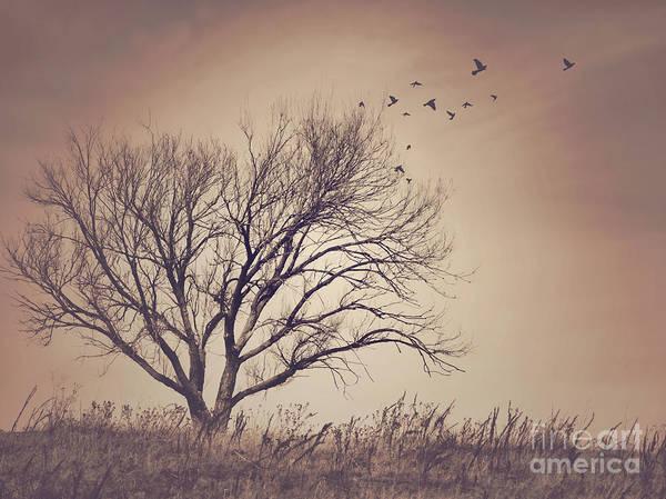 Leafless Tree Wall Art - Photograph - Tree by Juli Scalzi