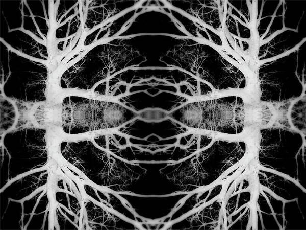 Wall Art - Photograph - Tree Kaleidescope  by Amber Flowers