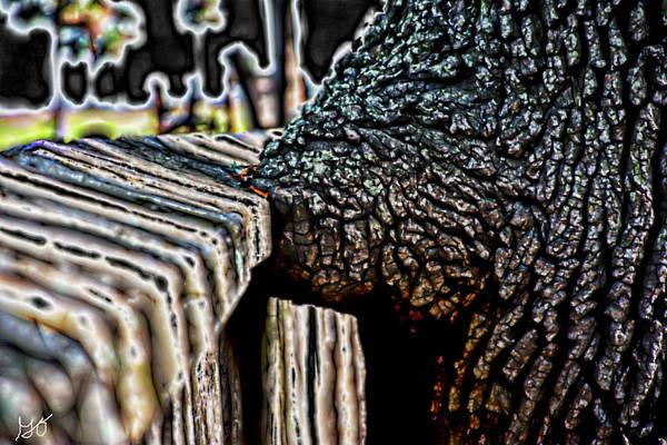 Photograph - Tree Kissed Wall by Gina O'Brien
