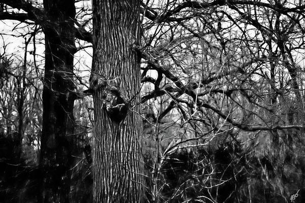 Photograph - Tree Knot by Gina O'Brien