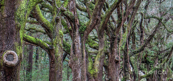 Photograph - Tree Line by Dale Powell