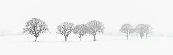 Wall Art - Photograph - Tree Line In Snow by Amanda Elwell