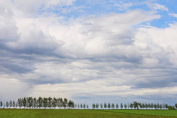 Photograph - Tree Line by James BO Insogna