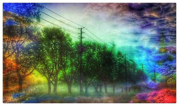 Photograph - Tree Lined  by Christine Paris