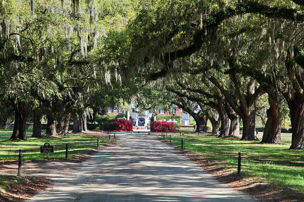 Photograph - Tree Lined Driveway by Jill Lang