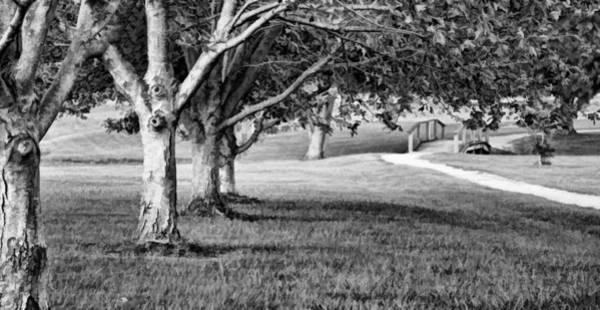 Knot Hole Photograph - Tree-lined Path To Footbridge - B/w by Greg Jackson