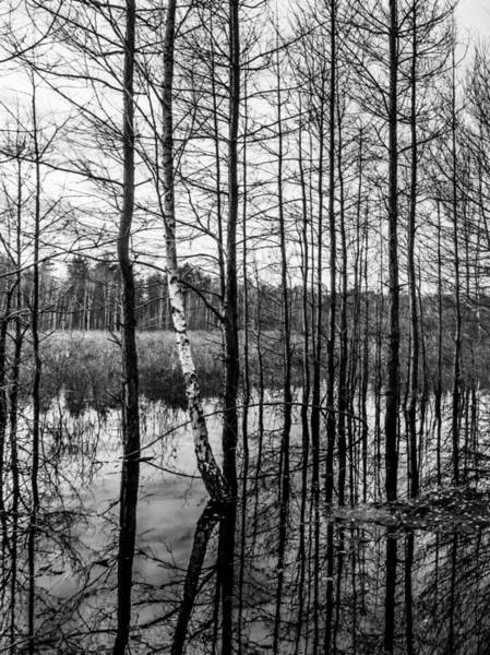 Photograph - Tree Lines by Dmytro Korol