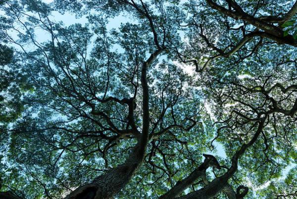 Similar Photograph - Tree Map by Sean Davey