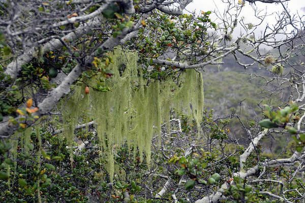 Wall Art - Photograph - Tree Moss At Montana De Oro State Park by Barbara Snyder