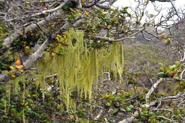 Wall Art - Photograph - Tree Moss At Montana De Oro State Park Painting by Barbara Snyder