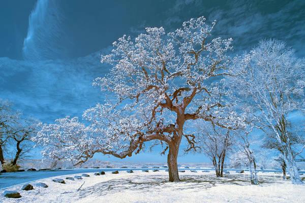 Wall Art - Photograph - Tree Near Bastrop by Norman Gabitzsch