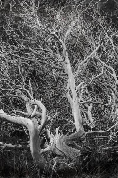 Wall Art - Photograph - Tree Near Wawona by Jim Dohms